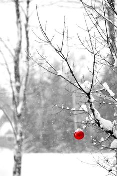 a lone red bulb