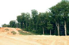 Die dümmste Idee: Abholzen für Sand
