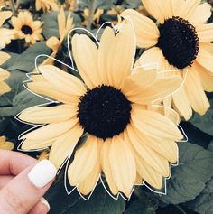 I love the hand-drawn outline of this sunflower! Vsco, Happy Colors, Mellow Yellow, Photos, Pictures, Belle Photo, My Favorite Color, Artsy, Beautiful