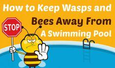 Bees and wasps a problem at your pool? Find out what you can do to keep wasps and bees away from a swimming pool once and for all. Keep Bees Away, Bee Problem, How To Kill Bees, Outside Pool, Fiberglass Swimming Pools, Pool Care, Pool Workout, Pool Heater, Intex Pool