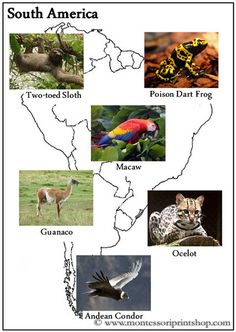 Animals of the Continents Sorting Cards - Printable Montessori Geography Learning Materials for home and school.