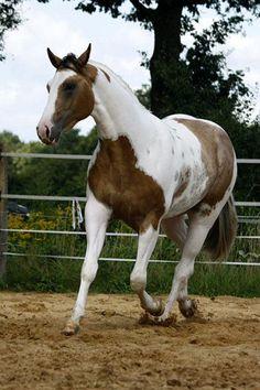 ☀ horse