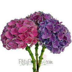 Love love love!!!! lets pit tgese everywhere!!! FiftyFlowers.com - Antique Dutch Hydrangea Purple Pink Flower