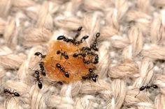 Annoyed of the ants? Need a permanent solution? Here's a blog which can give you some great tips to eliminate the ants from your home.