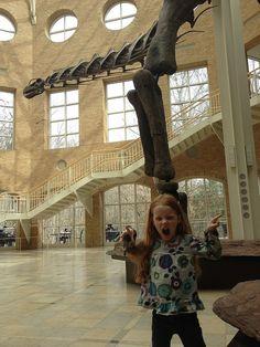 #fernbank #museum #dinosaurs