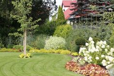 Zimozielony ogród przy białym domu - strona 221 - Forum ogrodnicze - Ogrodowisko