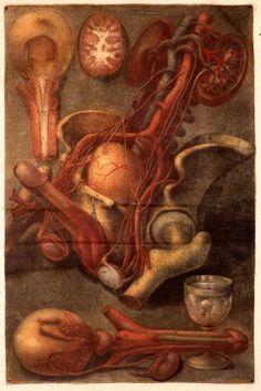 Myologie complete en couleur et grandeur naturelle, composée de l'Essai et de la Suite de l'Essai d'anatomie en tableaux imprimés, avec Joseph-Guichard Duverney (1746)