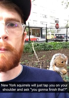 "New York squirrels will just tap you on your shoulder and ask, ""You gonna finish that?"""