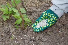 Maliny mohou mít úrodu, jako nikdy předtím. Naučte se dodržovat několik zásad - Svět kreativity Garden, Garten, Lawn And Garden, Outdoor, Tuin, Gardens, Yard