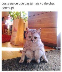 Des dizaines de meme francophone à découvrir sur Meme Gag tous les jours: Meme provenant de Facebook, Twitter, Instagram, Snapchat et bien d'autres ! Cats, Animals, Gatos, Animales, Animaux, Cat, Animal, Kitty, Cats And Kittens