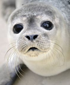 Cutest seal ever....<3