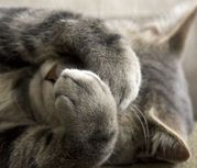 Mundo felino - Comportamiento - El gato en casa