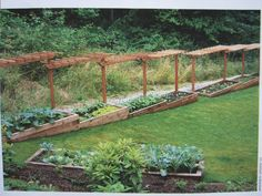 Pergola down the side of a terraced garden, great idea, could train with Roses and Wisteria