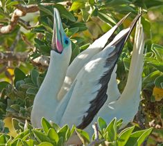 The 7 Most Beautiful Birds of Belize http://www.cahalpech.com/blog/the-7-most-beautiful-birds-of-belize/