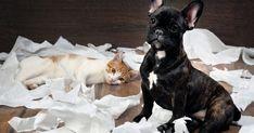 7 trucos para mantener la casa limpia si tienes perro o gato