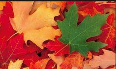Con estas hojas de diferentes tonos crearemos un mural.