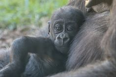 Want to keep up with our growing Alika...visit our website for her baby book!
