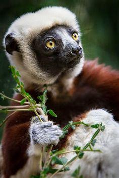 Mais uma vez vamos nos deleitar com a beleza das variadas formas de vida no planeta. Essa galeria de fotos de animais dá pra gente curt...