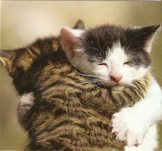 """Unfeeling"" Cats"