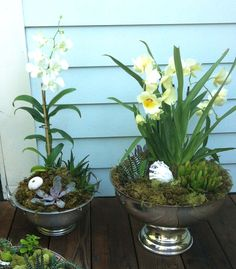 Orchid and Succulent planters  using silver bowls