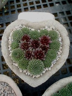 Hypertufa heart planter with hens & chicks