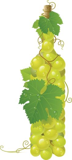 This high quality free PNG image without any background is about grape, berry, grapes, fruit and green grapes. Photo Clipart, Coin Design, Photoshop, Green Grapes, Png Photo, Rare Coins, Photo Backgrounds, Coin Collecting, Gold Coins