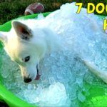 What Are The 7 Simple Live Hacks For Your  Dog? (Watch This Video) Watch the video on next page. When you have a dog, it is not easy. You need commitment, dedication, and love for your dog. There are times when you encounter problems.  Do you think your dog is eating too fast? What will you do when your Husky needs to cool himself during summer? Are you aware that you do not need a pool for you to do this? There's more..  Watch this life hacks for your dog – Go to Next Page …  Wa..