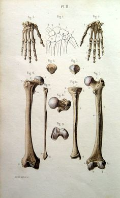 1852 original anatomy color print of HAND and by LyraNebulaPrints