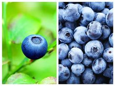 Anti Aging, Smoothie, Health Tips, Blueberry, Fruit, Berry, Smoothies, Blueberries, Healthy Lifestyle Tips