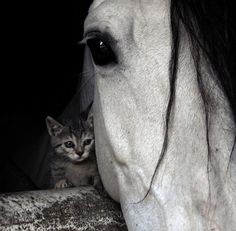 Secret Love | friends | horse | kitten | cat | black & white | photo | beautiful | love | www.republicofyou.com.au