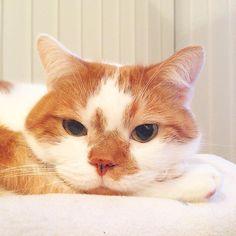 ウトウト #猫 #Cat #ilovecat