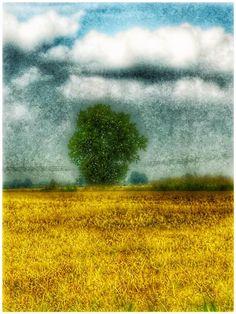 I quadri che offre la natura...