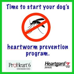 heartworm prevention your needs