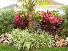 Tropical Landscaping - Tropical - Landscape - other metro