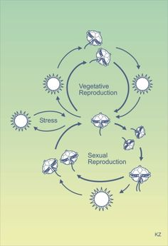 Deaktivoitu asexual reproduction