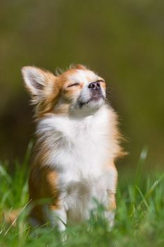 cute dog enjoying sunshine