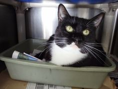 Lucy is a little over a year old, and has spent most of her life at the shelter. She's a gentle sweetie that loves to play & get pets!