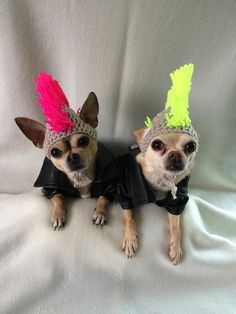 Punk rocker mohican dog hat / Mohawk for small by PimperedPooch