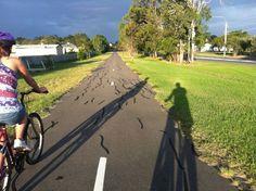 Cycling in Hervey Bay www.parkmyvan.com.au #ParkMyVan #Australia #Travel #RoadTrip #Backpacking #VanHire #CaravanHire