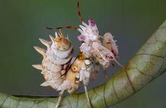 Lijstje van de week: 10x meest bijzondere insecten. #insecten #lijstje
