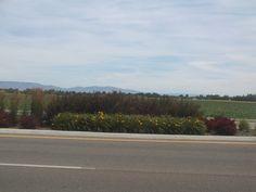 PT 414 JULY 2014 MERDIAN IDAHO FLOWERS IN THE MEDIAN. 10 MILE ROAD.