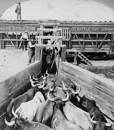 57 Best KC Stockyards images in 2019 | Cattle, Old
