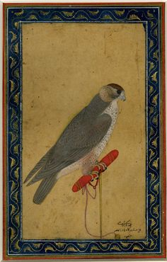 Portraits of falcon, by Mansur, Mughai Style, India, 17thC (Early)