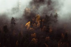 Dramatic clouds over a forest in Norway in autumn Norway Landscape, Forest Landscape, Abstract Landscape, Forest Photography, Fine Art Photography, Landscape Photography, Travel Photography, Norway Culture, Norway Forest