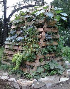 Hugelkultur - Using pallet wood to create raised bed for no stoop harvesting.