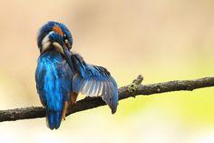 Blue Wing by Julian Rad on 500px