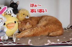 雪降ってます - http://iyaiyahajimeru.jp/cat/archives/51377