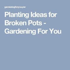 Planting Ideas for Broken Pots - Gardening For You