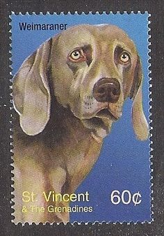Dog Art Head Study Portrait Postage Stamp WEIMARANER St Vincent Grenadines MNH