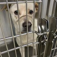 Available Pets At Fort Worth Animal Care Control Center In Fort Worth Texas Dog Pounds Dog Adoption Save Animals